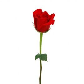 Rose Stabilizzate con Gambo