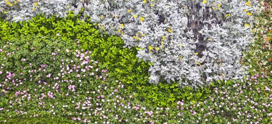 Giardini verticali da interno e da esterno vendita for Piante per giardino verticale esterno