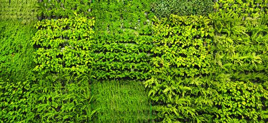 Giardini verticali da interno e da esterno vendita online flority fair - Giardini verticali interni ...