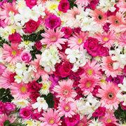 Un bel Mazzo di fiori freschi da regalare  Flority Fair