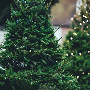 Albero Di Natale Online.Alberi Di Natale Vendita Online Flority Fair