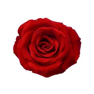 Rose Stabilizzate con Bocciolo