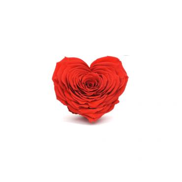 Rosa a cuore stabilizzata