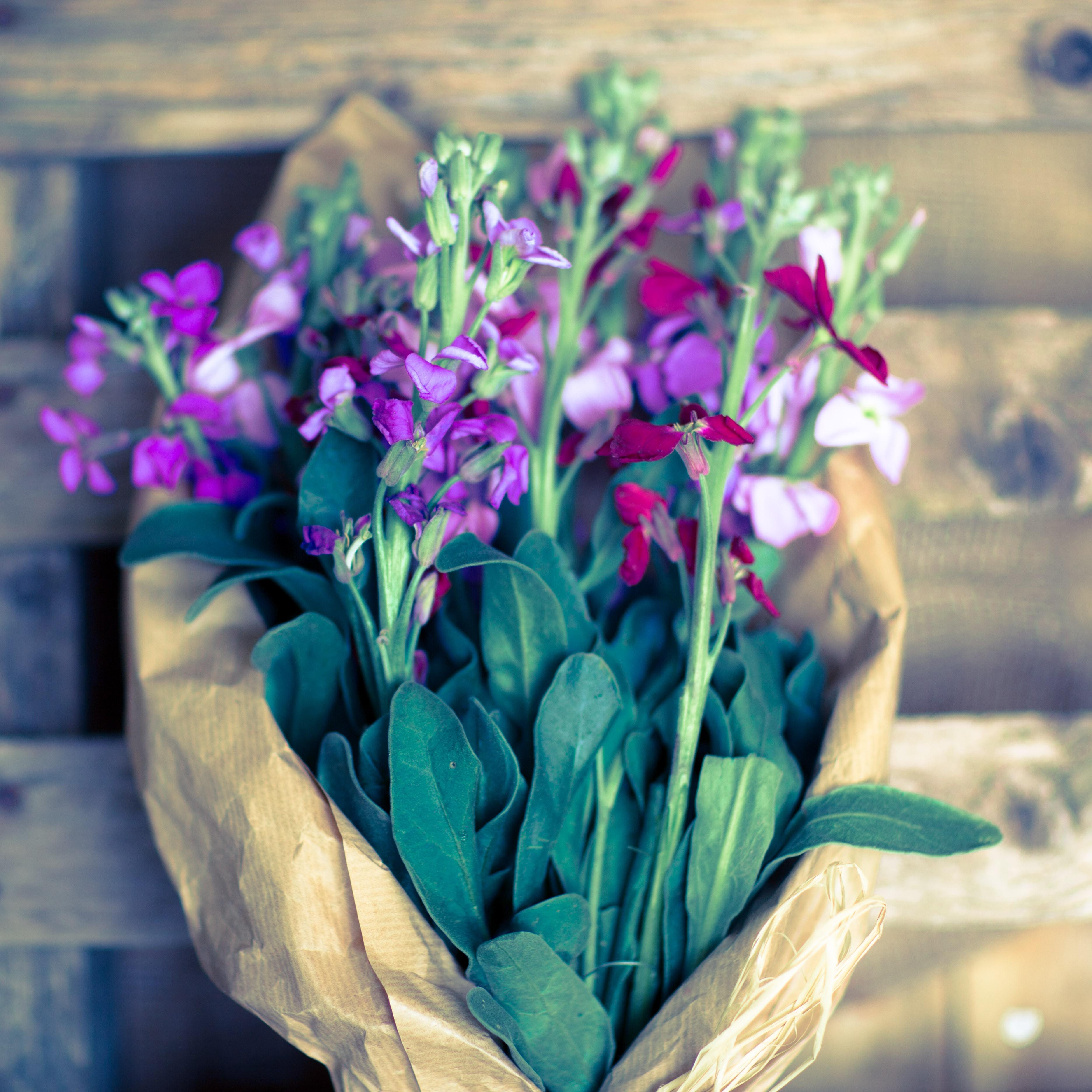 Piante Da Regalare A Pasqua bouquet viole di pasqua | flority fair