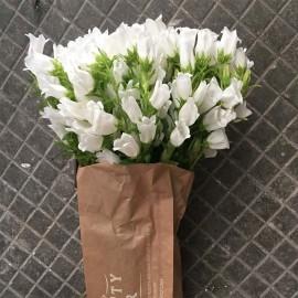 Bouquet Campanule
