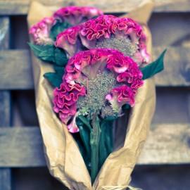 Bouquet Celosie