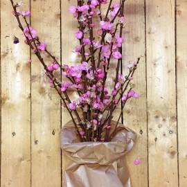 Bouquet Rami di Pesco