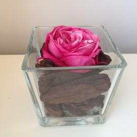 40 composizioni con Rosa stabilizzata da giardino