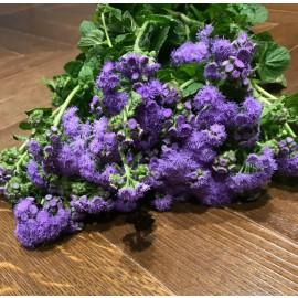 Bouquet Agerato