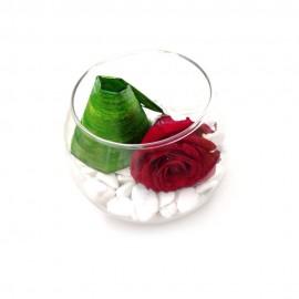 Composizione Rosa Stabilizzata boulle