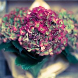 Bouquet Ortensie