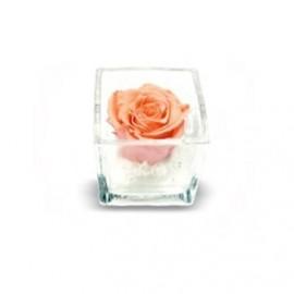 Composizione Rosa Stabilizzata cubo