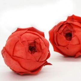 Rose Nikki Stabilizzate