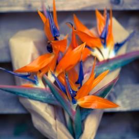 Bouquet Strelitzie