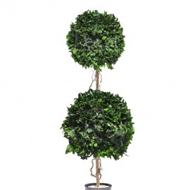 Tenuifolium stabilizzato con 2 cespugli tondi