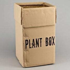 Vaso Plant