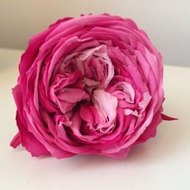bocciolo di Rosa stabilizzata da giardino