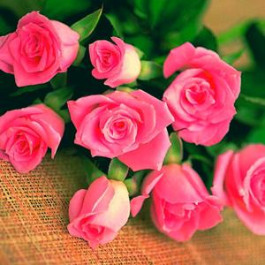 Fiori Km 0.Fiori A Km 0 Slow Flowers Acquista Fiori Di Stagione Online
